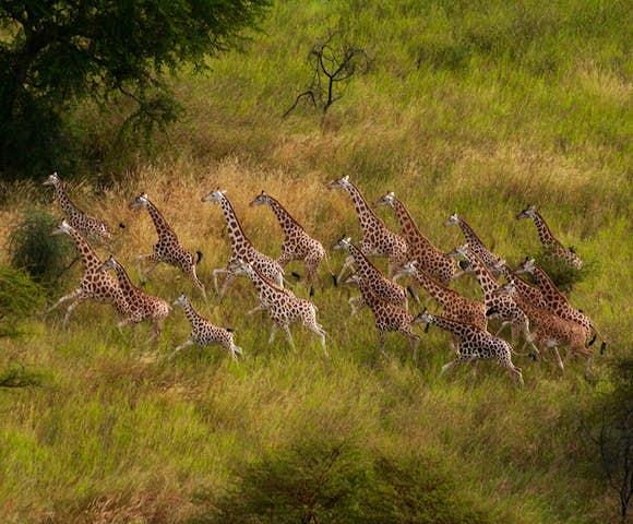 Ethiopia Safaris