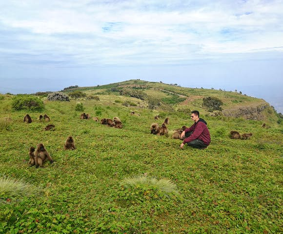 Man sitting in green field with Gelada Monkeys in the Simien Mountains